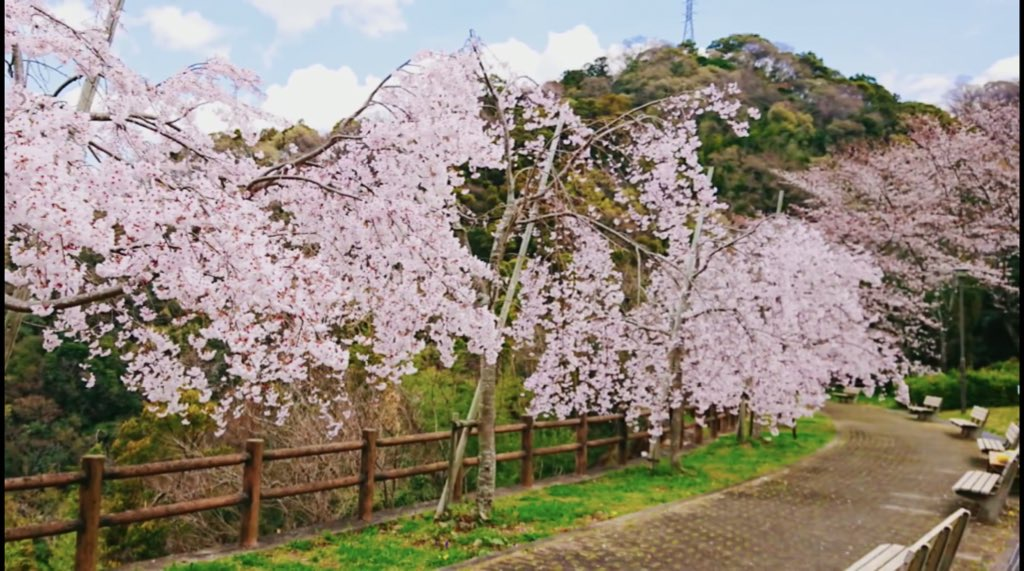 【西部公園】日本のさくら名所100選
