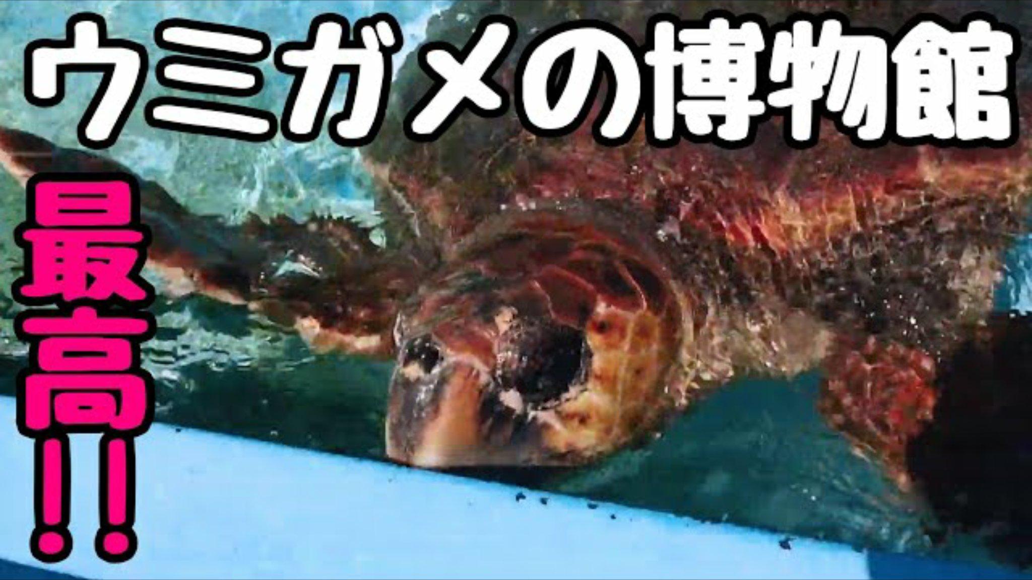 【日和佐うみがめ博物館カレッタ】